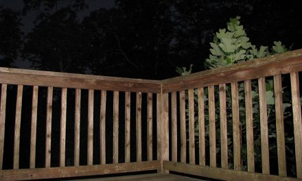 Repair Loose Railings or Replace Damaged Railings
